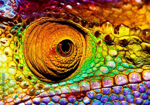 canvas print picture Reptilian eye