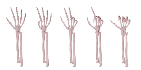 skeleton hands counting 1-5