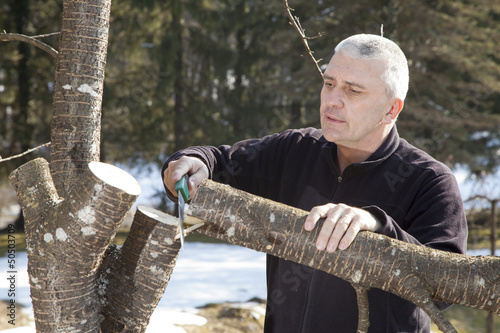 Mid aged man gardener sawing, cutting fruit tree