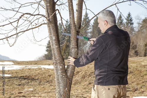 Mid aged man gardener cutting fruit tree
