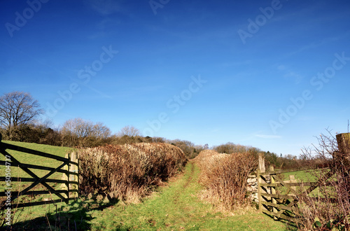 Hedge lined country trackway with gates