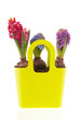 Colorful Hyacinths in green shopping bag