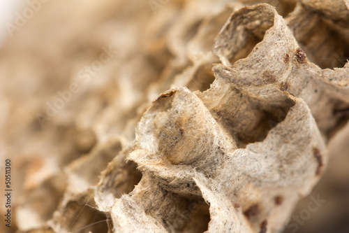 beautiful honeycomb , background