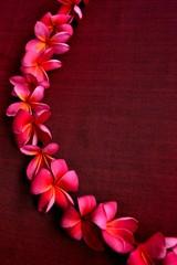 Wreath of pink plumeria on dark red background