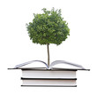 citrus tree growing from open book