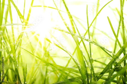 green summer grass and sunlight