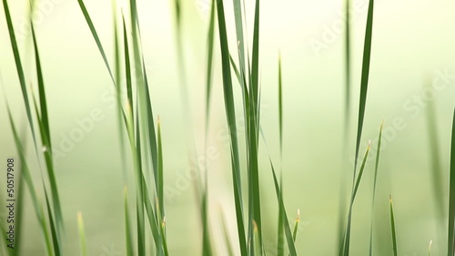 Serene Grass. Shallow depth of field.