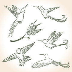 colibri drawing made in line art style