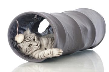 Spielende Katze - Playing cat