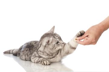 Katze erhält Belohnung - Cat gets reward
