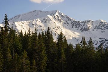 ośnieżony górski szczyt ponad lasem