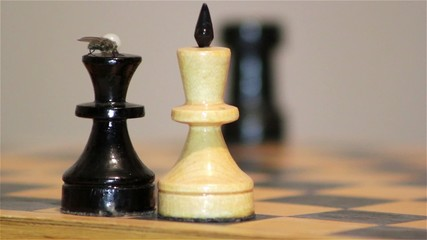 chess game, chess fly