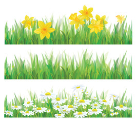 Vector of daffodil flowers, grass and chamomiles isolated.