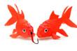 vorsichtige Goldfische