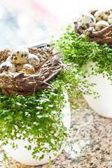 Osternester mit Wachteleier auf Bubikopf am Küchenfenster