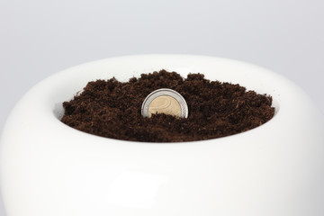Euro Coin Growing from Soil