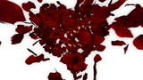 Rose Petals Falling overhead into Heart Shape with Alpha