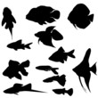 Collection of  aquarium fishes (Vector)