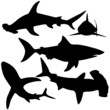 Collection of sharks (Vector)
