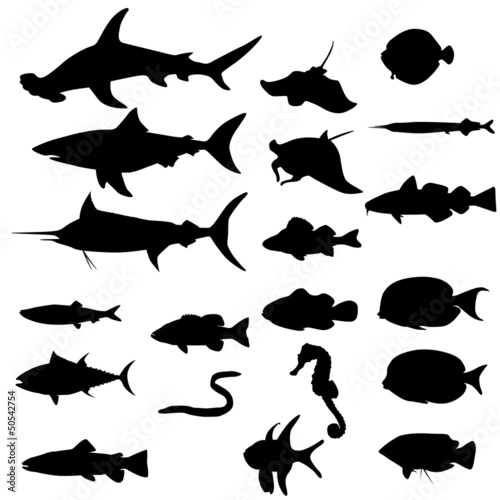 Collection of saltwater fishes (Vector)