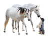 camargue horses and dog