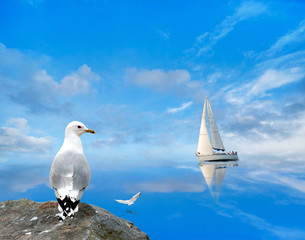 seagull watching a yacht