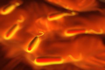 Gram-negative rod-shaped bacteria have a single polar flagellum