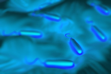 Gram-negative rod-shaped bacteria have a single polar flagellum