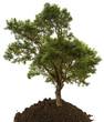 arbre, concept protection des forêts