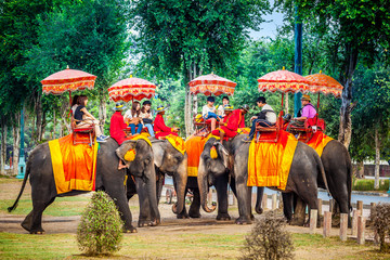 The tourist have fun with ride on the elephant