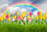 Landscape with tulip flowers and rainbow