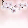 Spring border background with  blossom flower