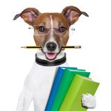 Fototapety school dog
