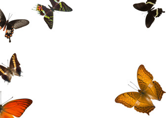 Sundry Butterflies On White Background