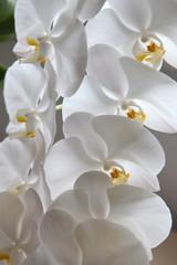 orkide14