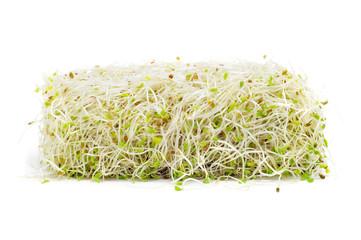 alfalfa sprouts