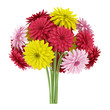 bouquet of yellow red and pink flowers isolated on white backgro