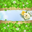 Wood background with clover and roses
