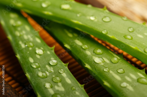 Aloe vera leaves on wooden background, close up