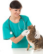 female vet in green protective uniform with cat in surgery