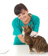 female vet in green uniform with cat in surgery