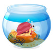 A snail inside an aquarium