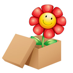 A flower inside the box