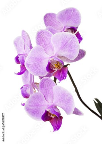 Papiers peints Orchidée Light purple orchid isolated on white