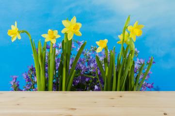Osterglocken und Glockenblume vor blauem Himmel
