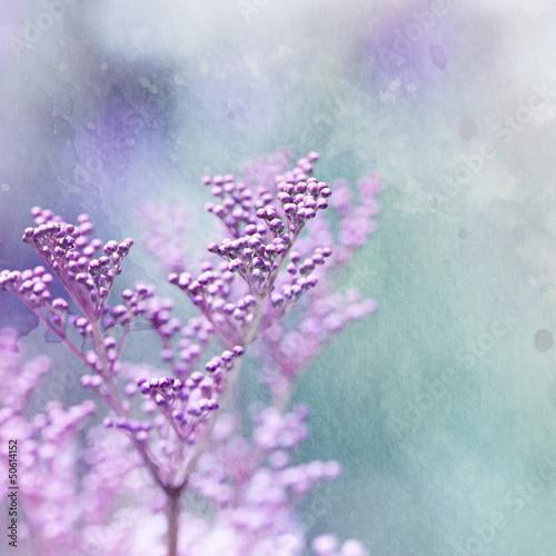 Little pink flowers © B. and E. Dudziński