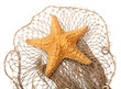 The Caribbean Starfish (Oreaster reticulatus) on a fishing net. - 50615196