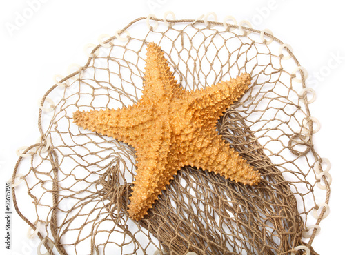 The Caribbean Starfish (Oreaster reticulatus) on a fishing net.