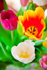Close-up Tulips