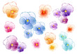 colorful pansies, vector set